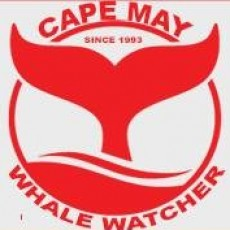 Cape May Whale Watcher