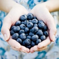 Butch's Blueberries