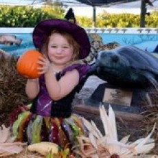 Things to do in Martin County-Port St Lucie, FL for Kids: Fletch's Fall Festival @ Loggerhead Marinelife Center (FREE), Loggerhead Marinelife Center - Juno Beach