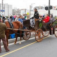 Cape May County, NJ Events: FREE Horse & Carriage Rides