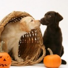 Pet Photos in the Pumpkin Patch to Benefit the Animal Rescue Foundation