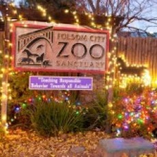 Things to do in Folsom-EDH, CA for Kids: Wild Nights and Holiday Lights, Folsom City Zoo Sanctuary