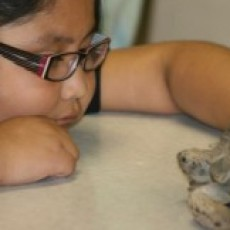Things to do in Phoenix North, AZ for Kids: Phoenix Herpetological Society - Guided Tour, Phoenix Herpetological Society