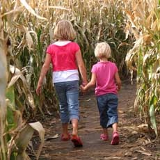 Things to do in South Windsor, CT for Kids: Corn Maze, Lyman Orchards