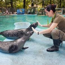 Things to do in St. Louis West County, MO for Kids: Daily Summer Sea Lion Show, Saint Louis Zoo