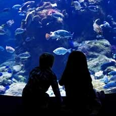 Things to do in Southlake-Keller, TX for Kids: Toddler Tuesdays at SEA LIFE, SEA LIFE Aquarium - Grapevine Mills Mall