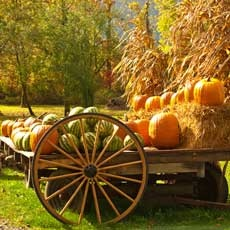 Things to do in Olathe, KS for Kids: Pumpkin Season, Faulkner's Ranch
