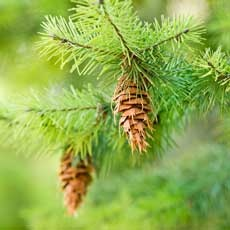 Westchester North, NY Events for Kids:  Holiday Decorations from Nature