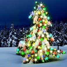 Edison-Piscataway, NJ Events for Kids: Holiday Tree Lighting