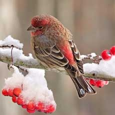 Troy, MI Events: Drop-in Ornament Making for the Birds