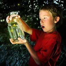 Things to do in Westchester North, NY for Kids:  Annual Firefly Festival, Trailside Nature Museum