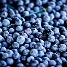 PYO Blueberries!