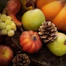 Fall Harvest, Hayrides and Pumpkin Patch