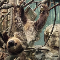 Things to do in Leominster-Lancaster, MA for Kids: Breakfast with the Sloth, Franklin Park Zoo