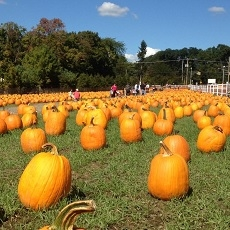 A.Casola Farms' Famous Fall Fest