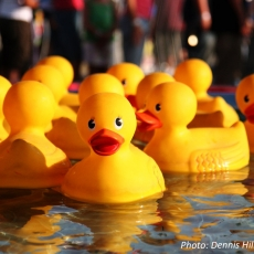 7th Annual Rubber Ducky Race