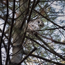 Things to do in Lake George-Saratoga Springs, NY: Owl Prowl at Wilton Wildlife Preserve & Park