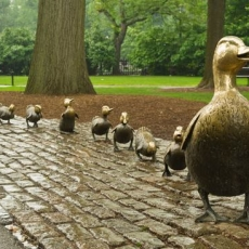 Things to do in Brookline-Norwood, MA: Duckling Day Parade