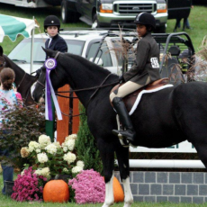 Folly Farm Classic Horse Show and Family Day (Free)