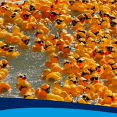 Things to do in South Tampa, FL for Kids: Incredible Duck Race, Curtis Hixon Waterfront Park