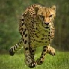 Cincinnati Eastside, OH Events for Kids: Cheetah Run/Walk & Cubs Fun Run
