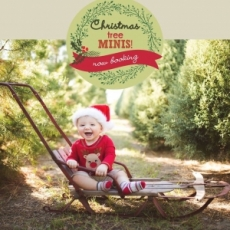 Christmas Tree Farm Mini Sessions - Booking Now!