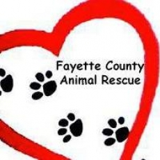 Care and comfort for sick and abused animals.