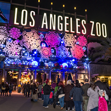 L.A. Zoo Lights (Nov 17-Jan 7)