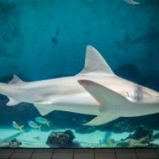 Breakfast with Sharks at Mote