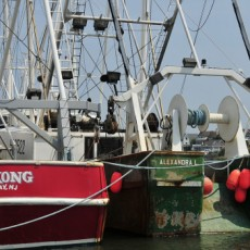 Cape May County, NJ Events: Fisherman's Wharf Tour
