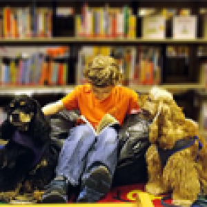 Things to do in Plymouth-Middleborough, MA: Reading with Miss Marilyn's Spaniels