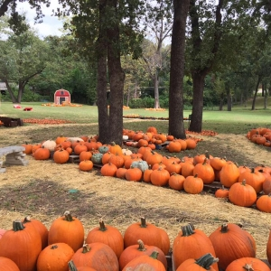 Arlington, tx vote for us! The pumpkin patch at first christian church.