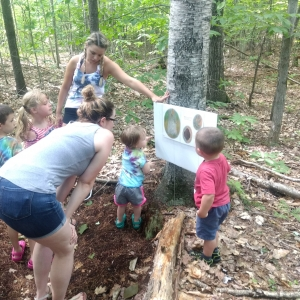 Things to do in Concord, NH for Kids: Tale Trail- Leaf Man, Petals in the Pines