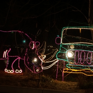 Things to do in Colorado Springs, CO: Electric Safari