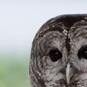 Mansfield-Attleboro, MA Events: Family Owl Prowl