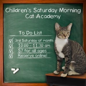 Things to do in Columbia, MO: Children's Cat Academy