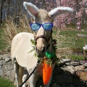 Westchester North, NY Events: Community Easter Egg Hunt