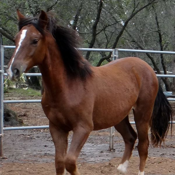 All About Equine Animal Rescue