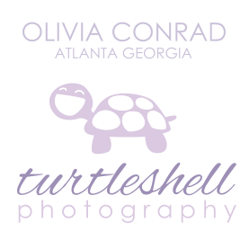 Turtle Shell Photography