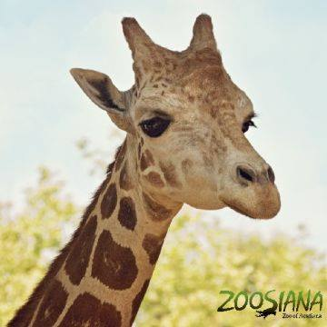 Zoosiana - Zoo of Acadiana