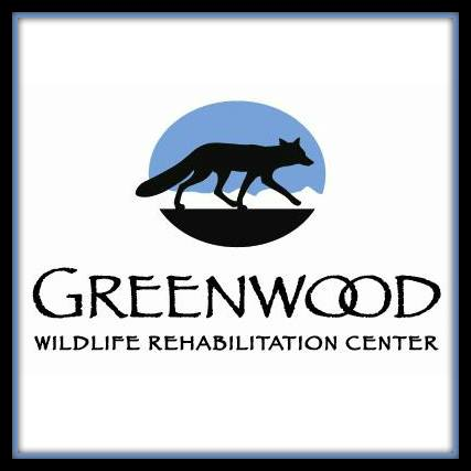 Rehabilitating Local Wildlife